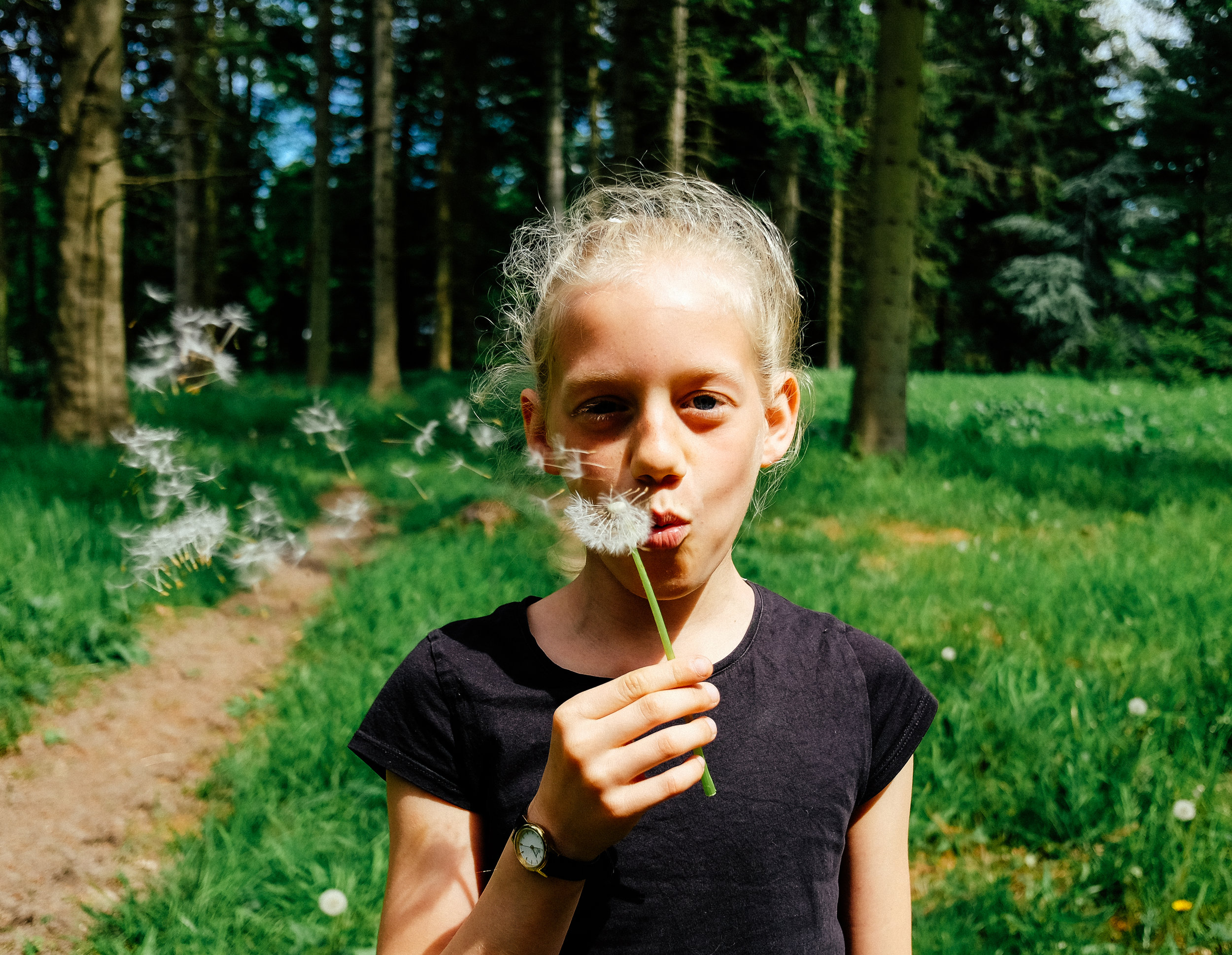 blowing dandelion seeds in nature while on a family vacation