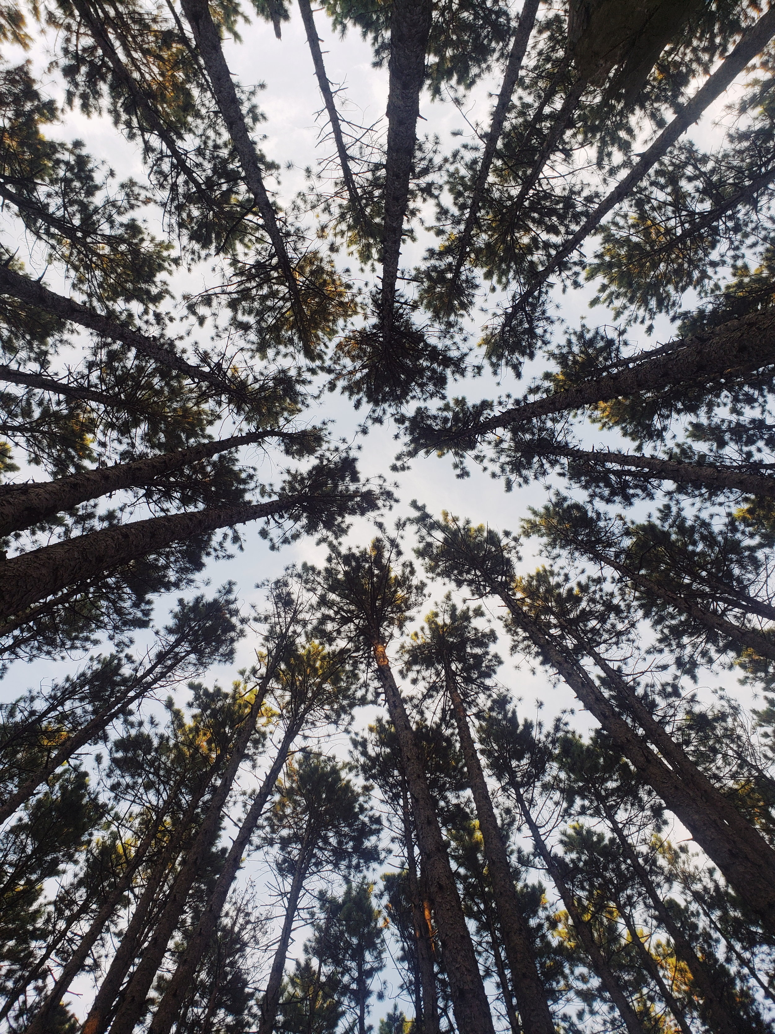 looking up at trees while riding a horse