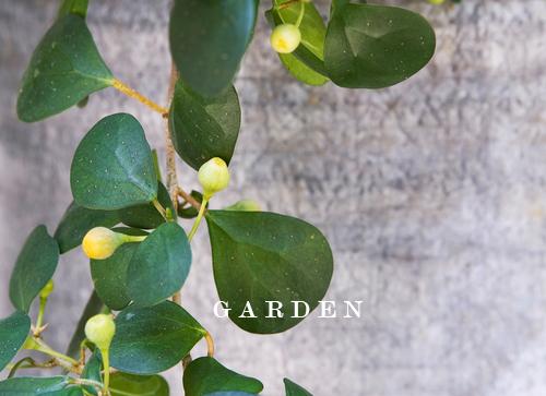 Garden_SF.jpg