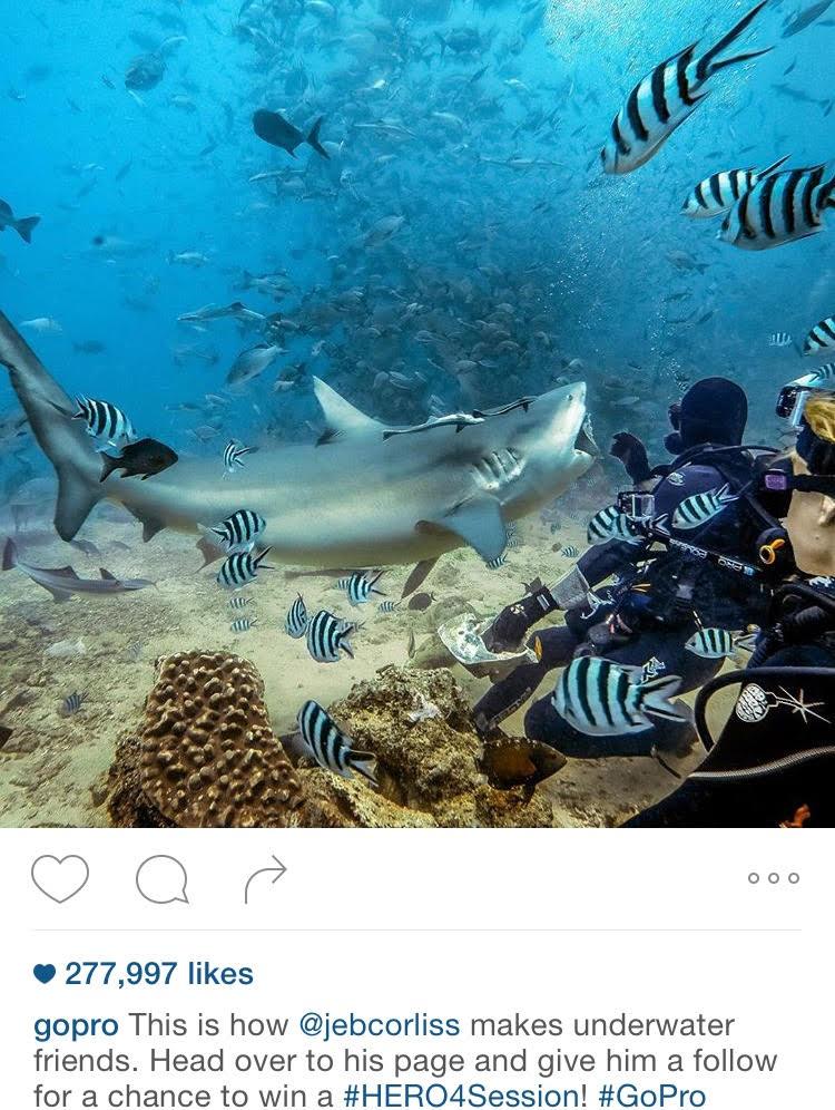 Making New Friends Underwater