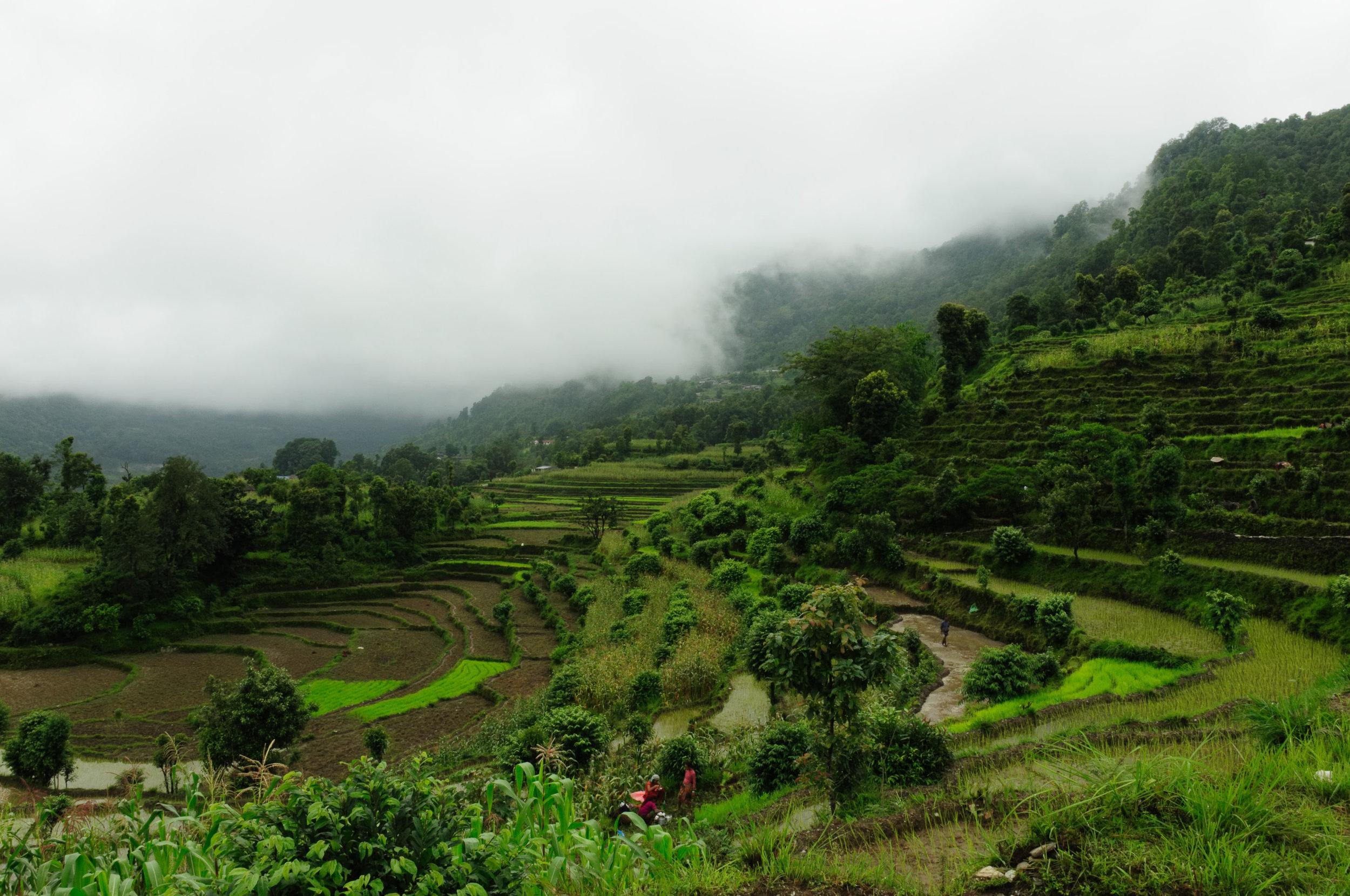 wrk nepal 2011 best farming scene DSC_0154.jpg