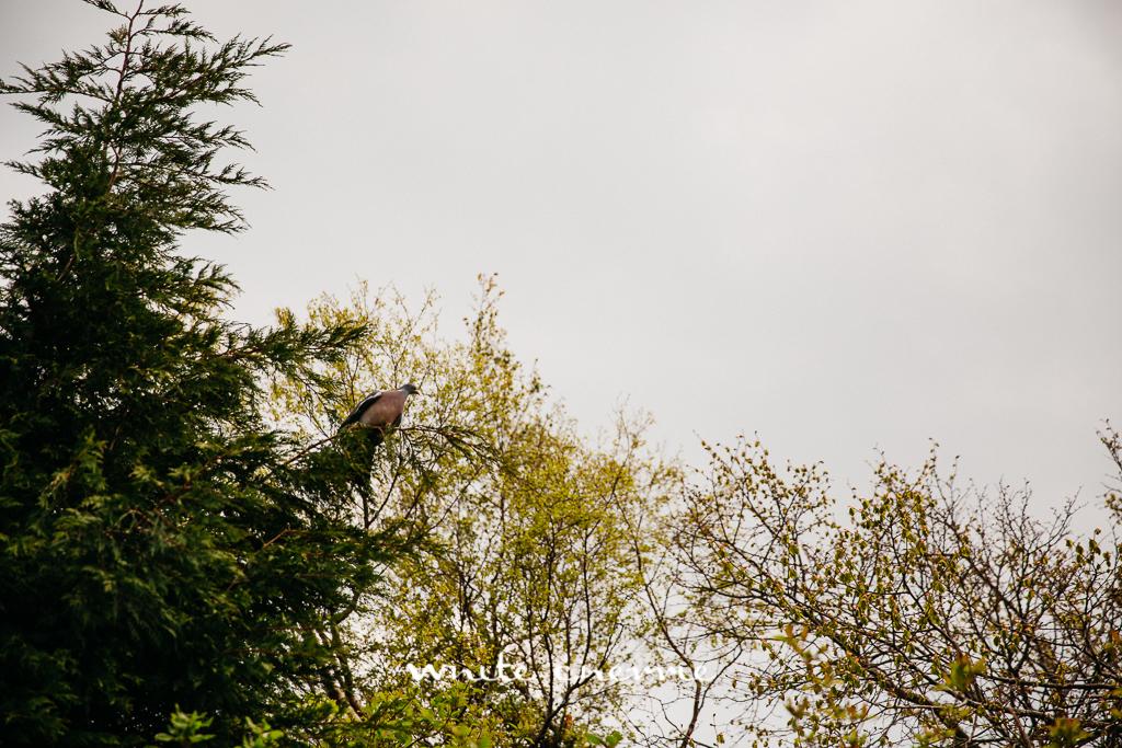 White Cherrie, Edinburgh, Natural, Wedding Photographer, Debbie & Billy previews (15 of 57).jpg