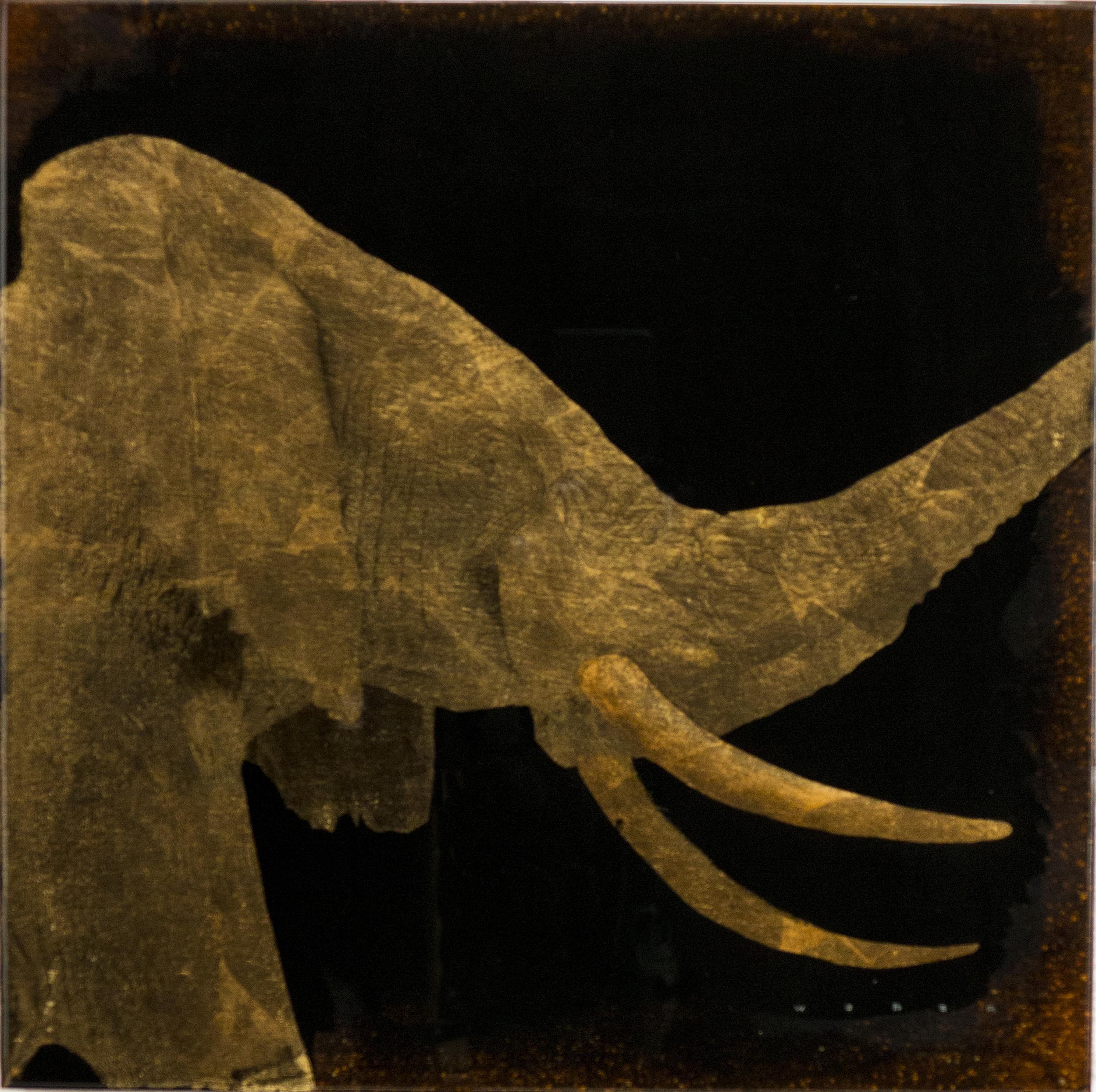 ELEPHANT PROFILE, 12 X 12