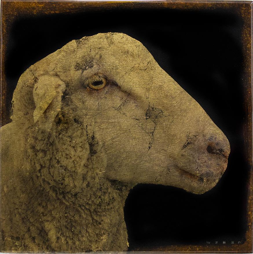 SEITZER SHEEP, 12 X 12