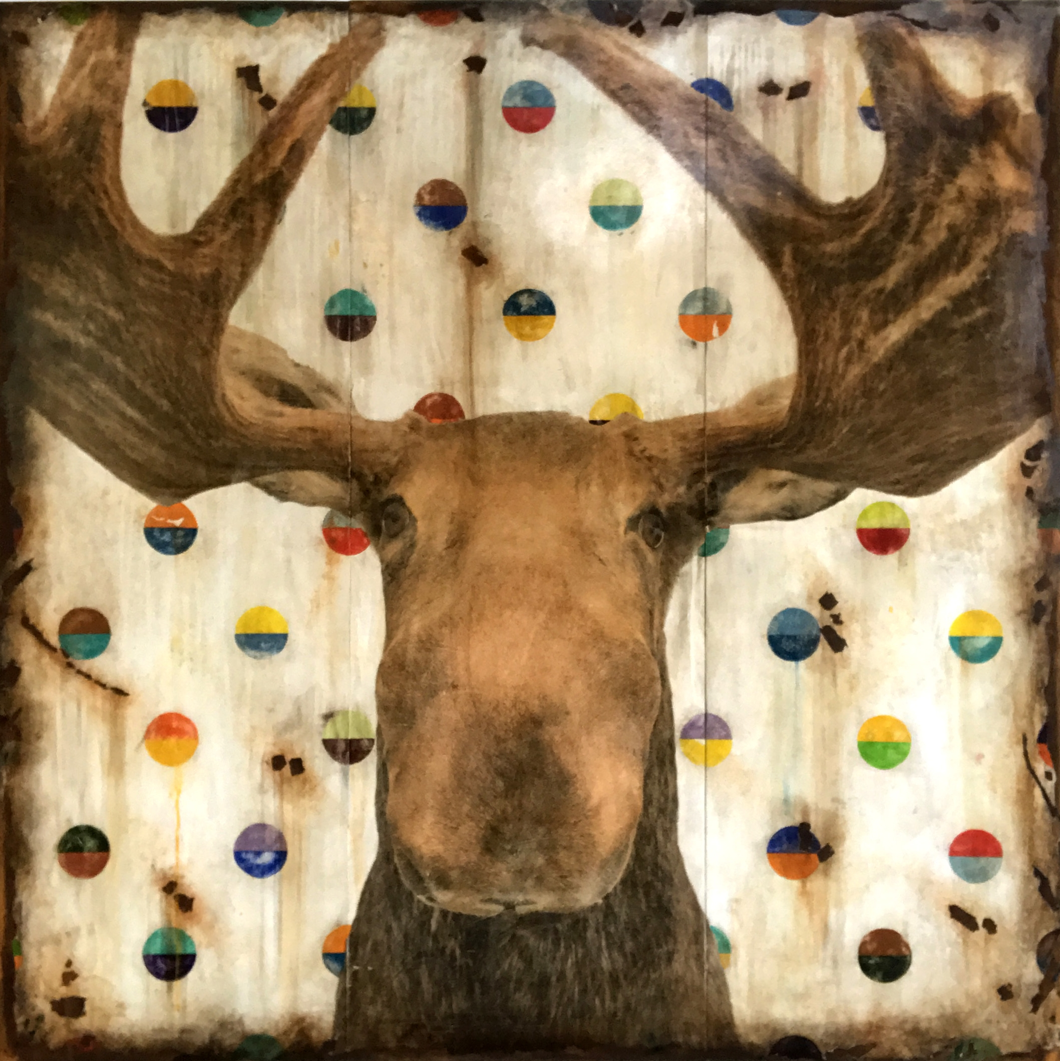 MOOSEY GOODNESS, 72 X 72, SOLD