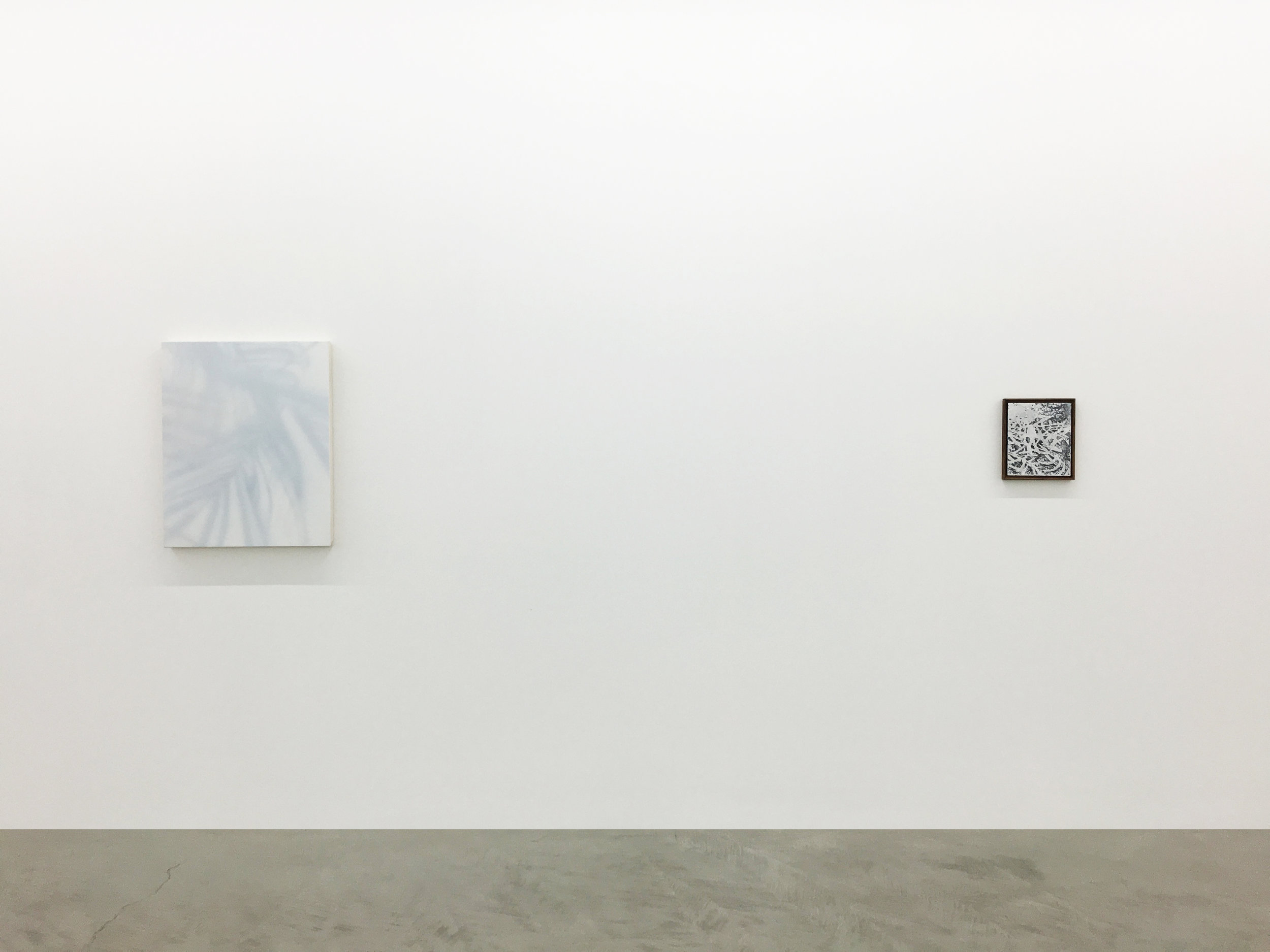 Installation view of James Case Leal paintings depicting plant shadows.