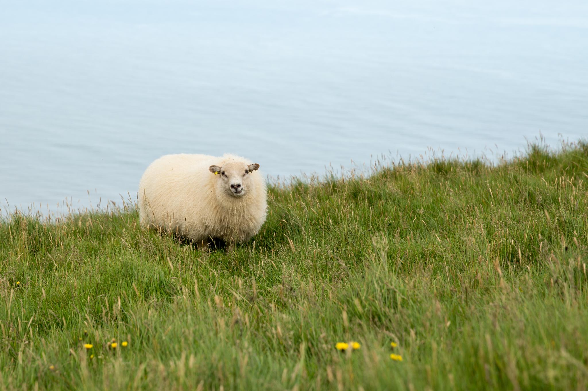 Iceland Day 2-50.jpg