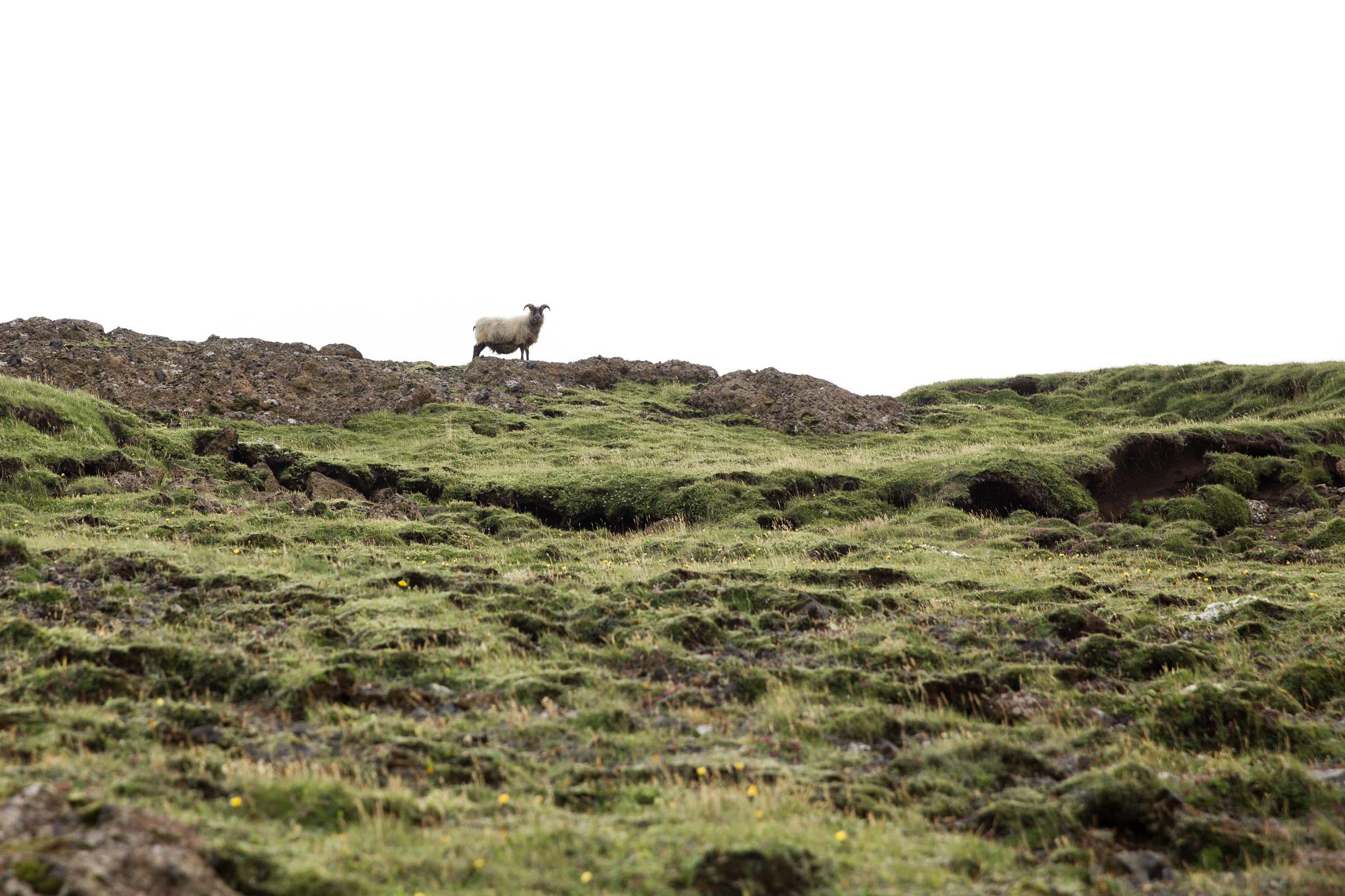 Iceland Day 2-51.jpg
