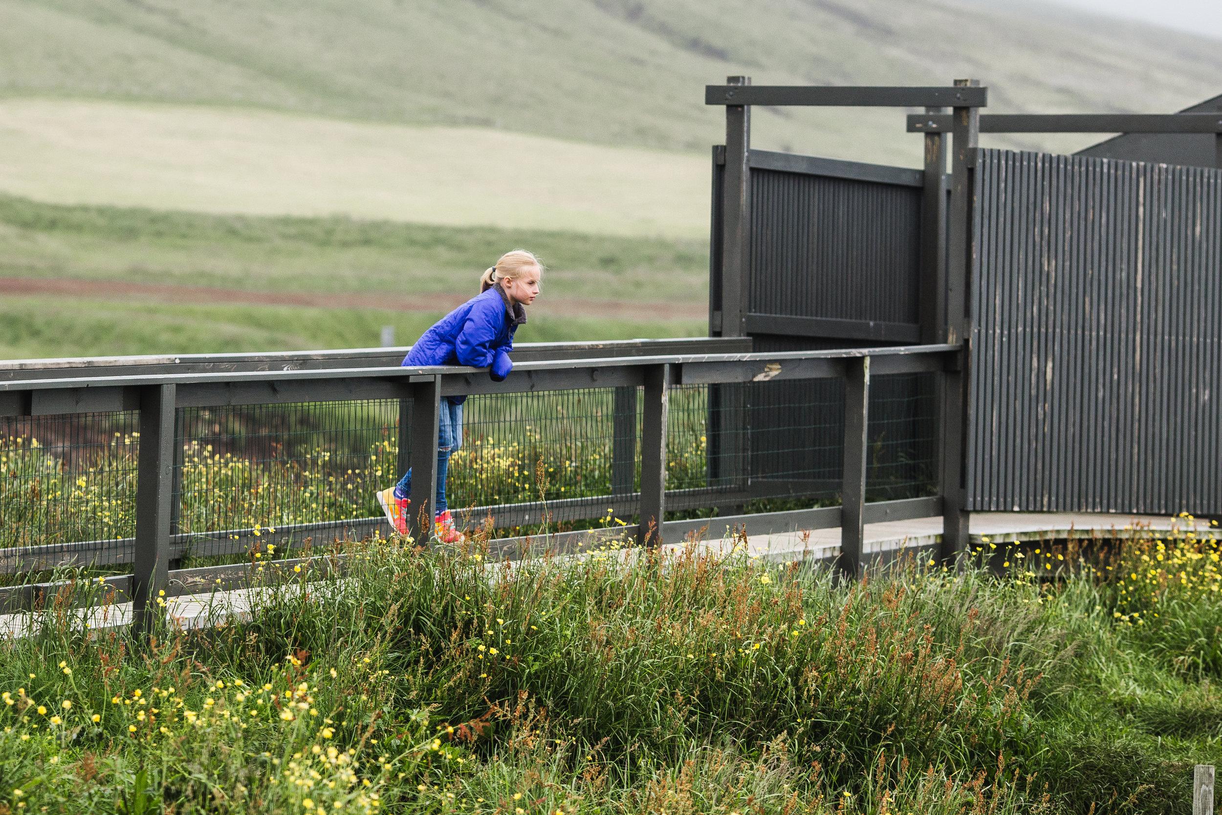Iceland Day 4-33.jpg