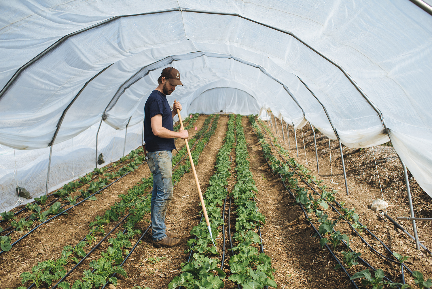 Greenhouses & Tunnels — The Market Gardener