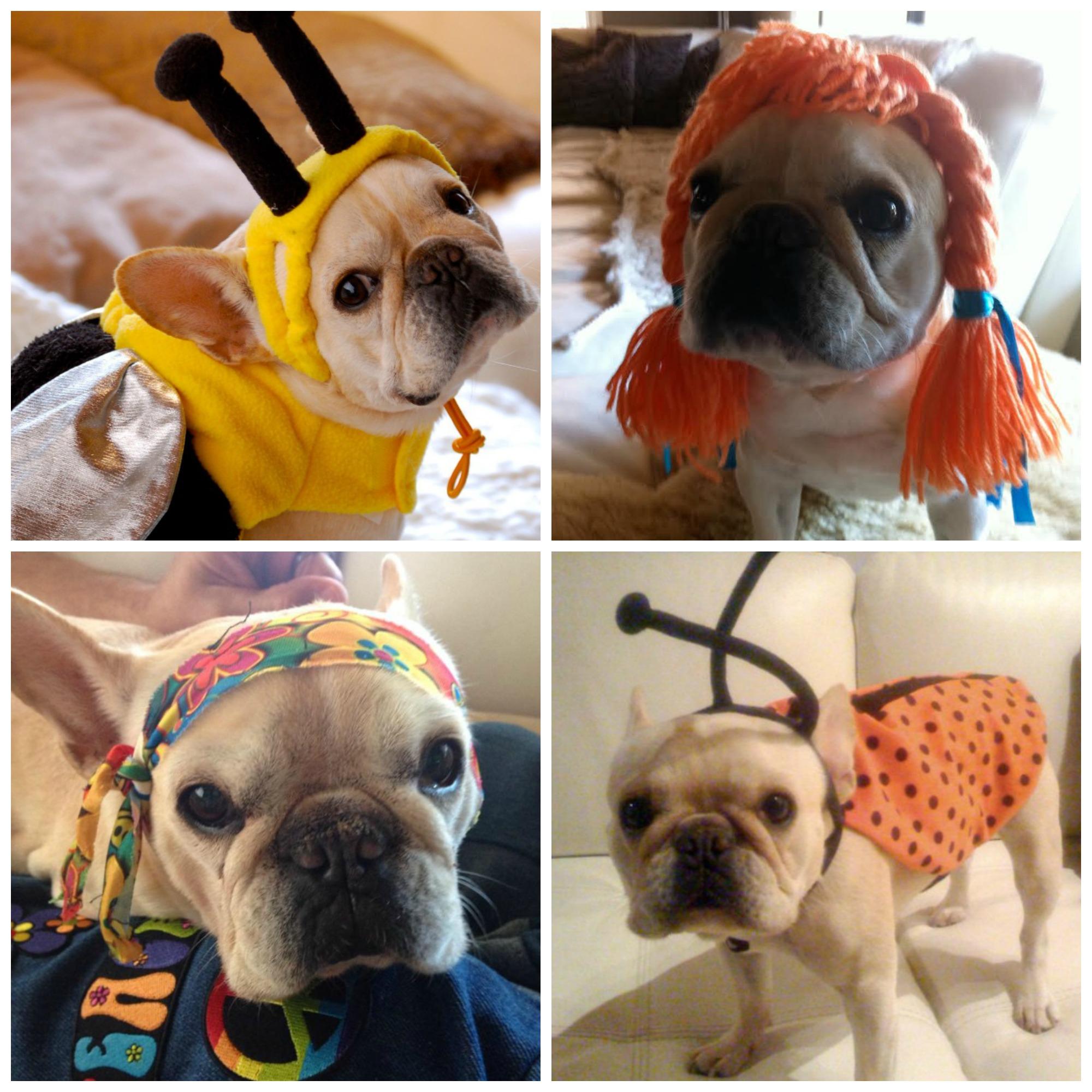 stella-costume-collage