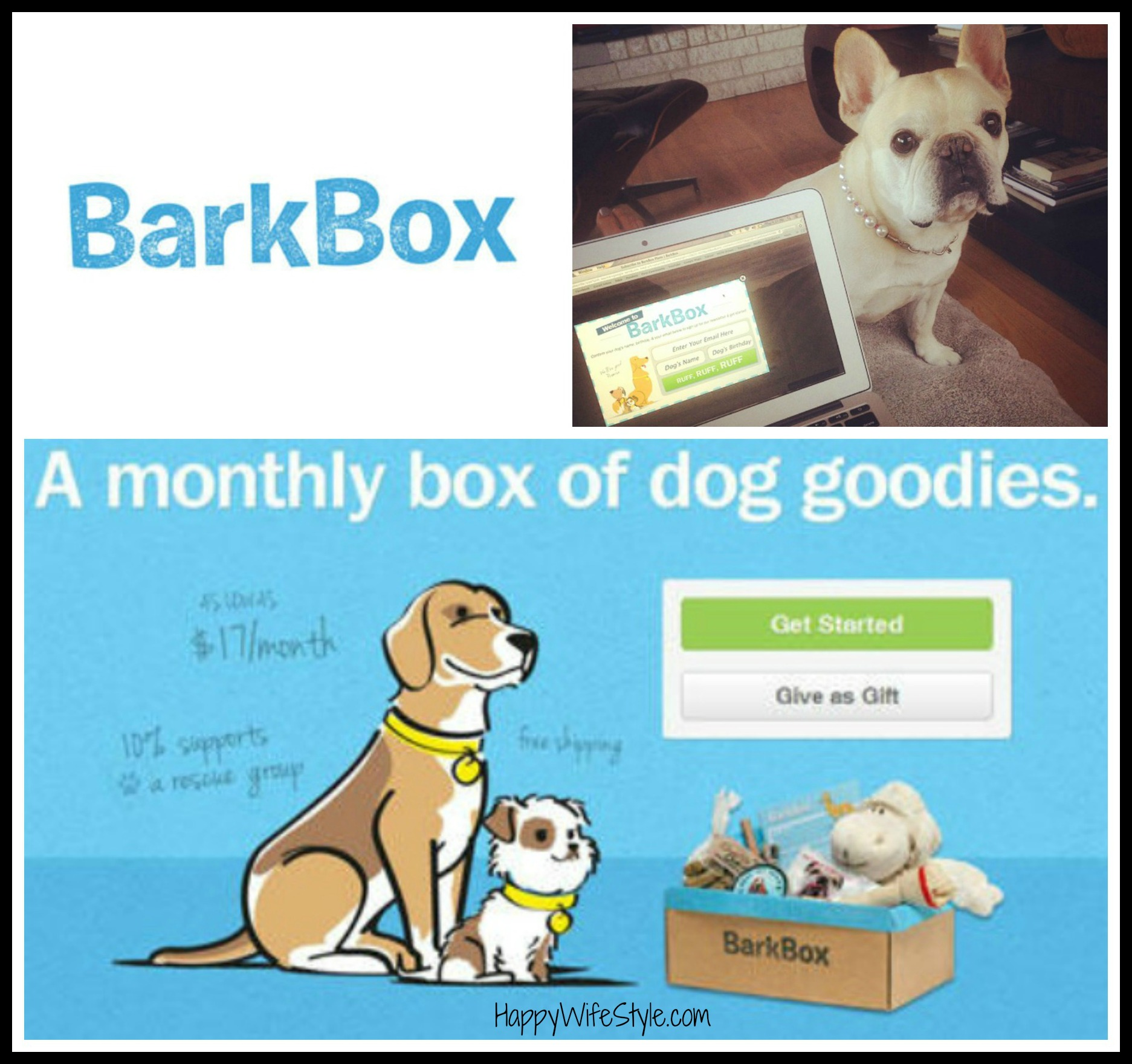barkbox-stella