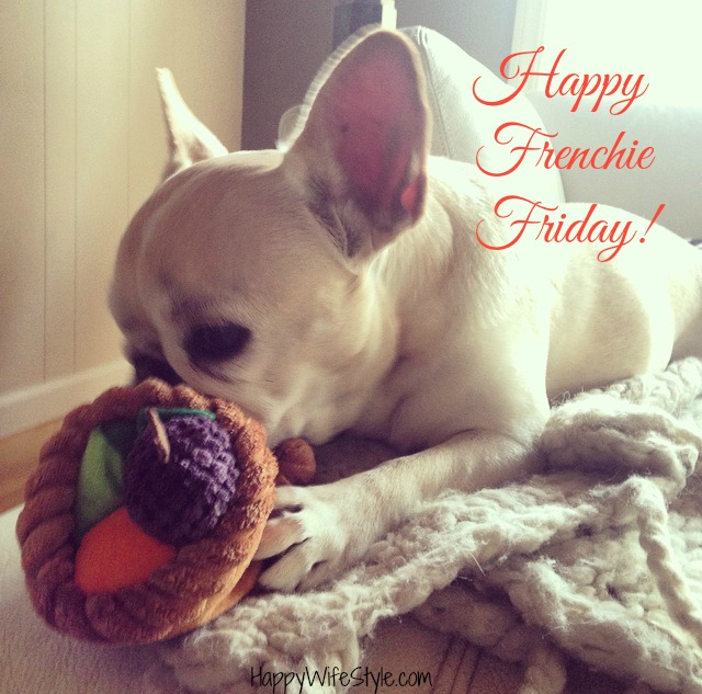 frenchie-friday-cornocopia