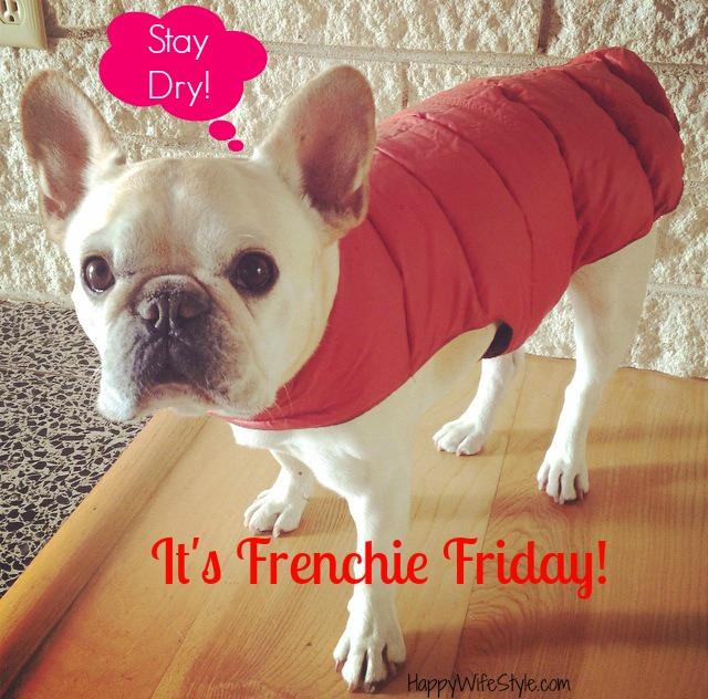 frenchie-friday-stat-dry