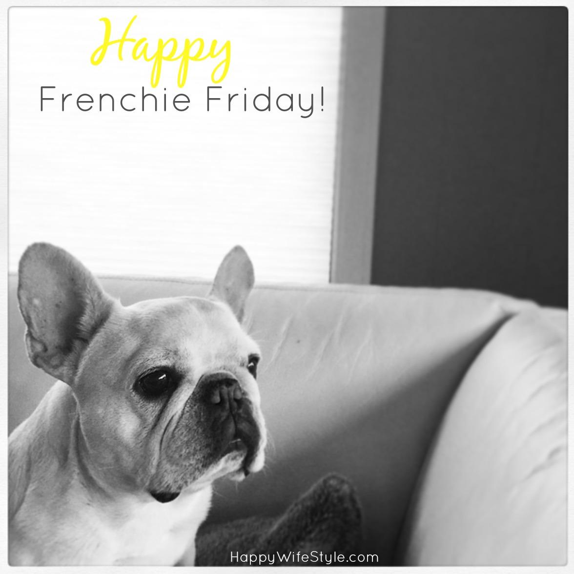 frenchie_friday