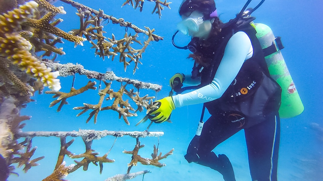 Replanting Coral Reefs -
