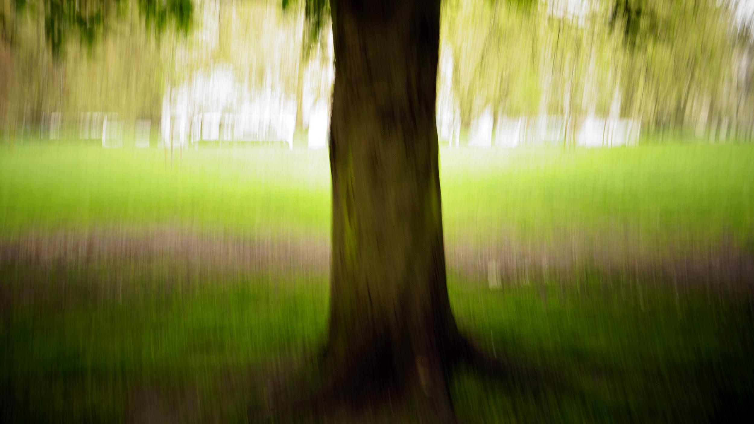 Tree_YA_2018.jpg