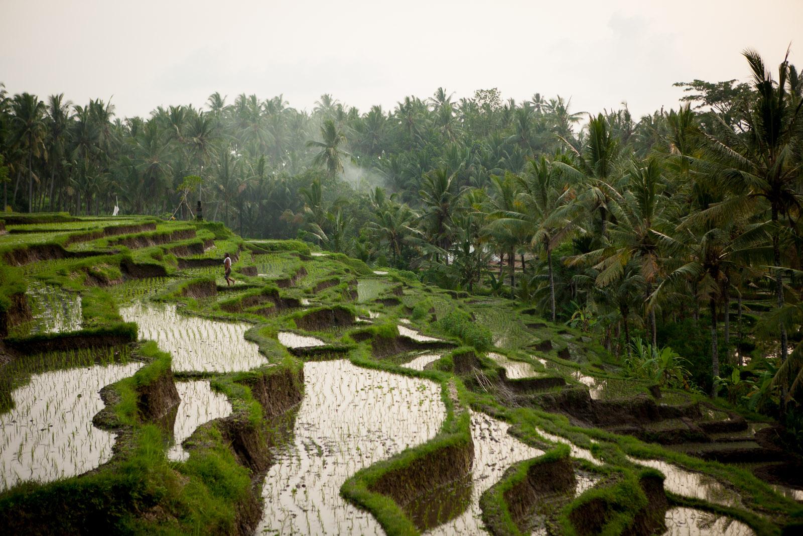 Soulshine, Bali, Indonesia
