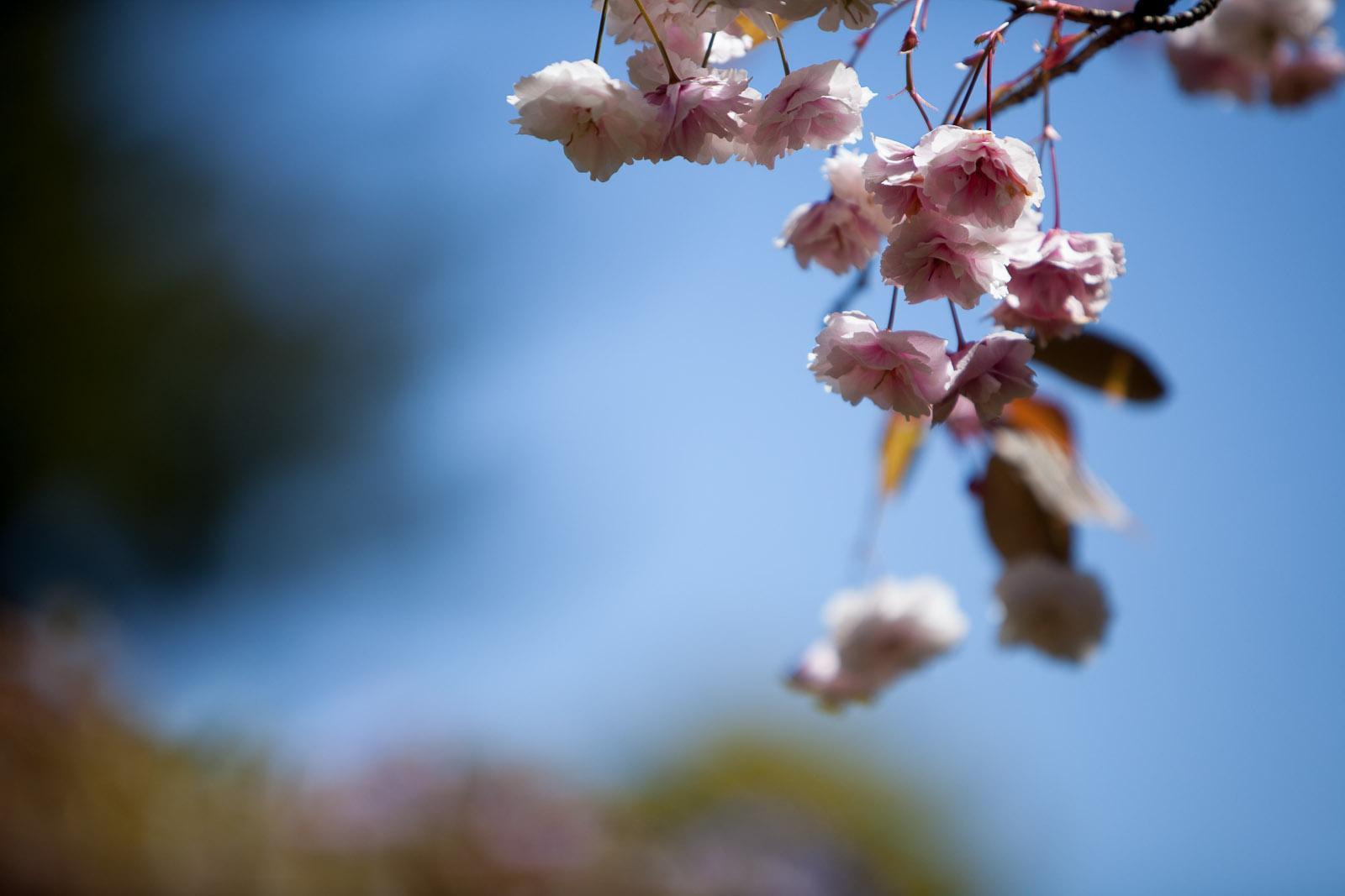Japanese Garden, Golden Gate Park, SF, California