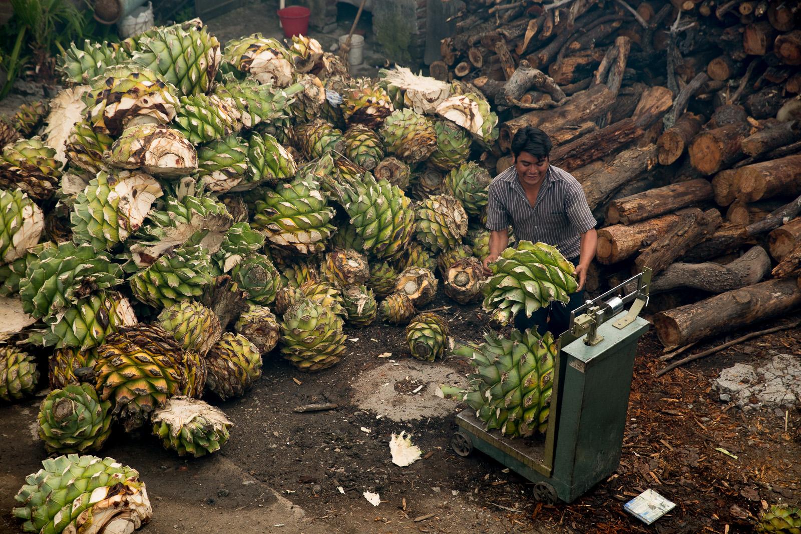 Making Mezcal, San Baltazar, Oaxaca, Mexico