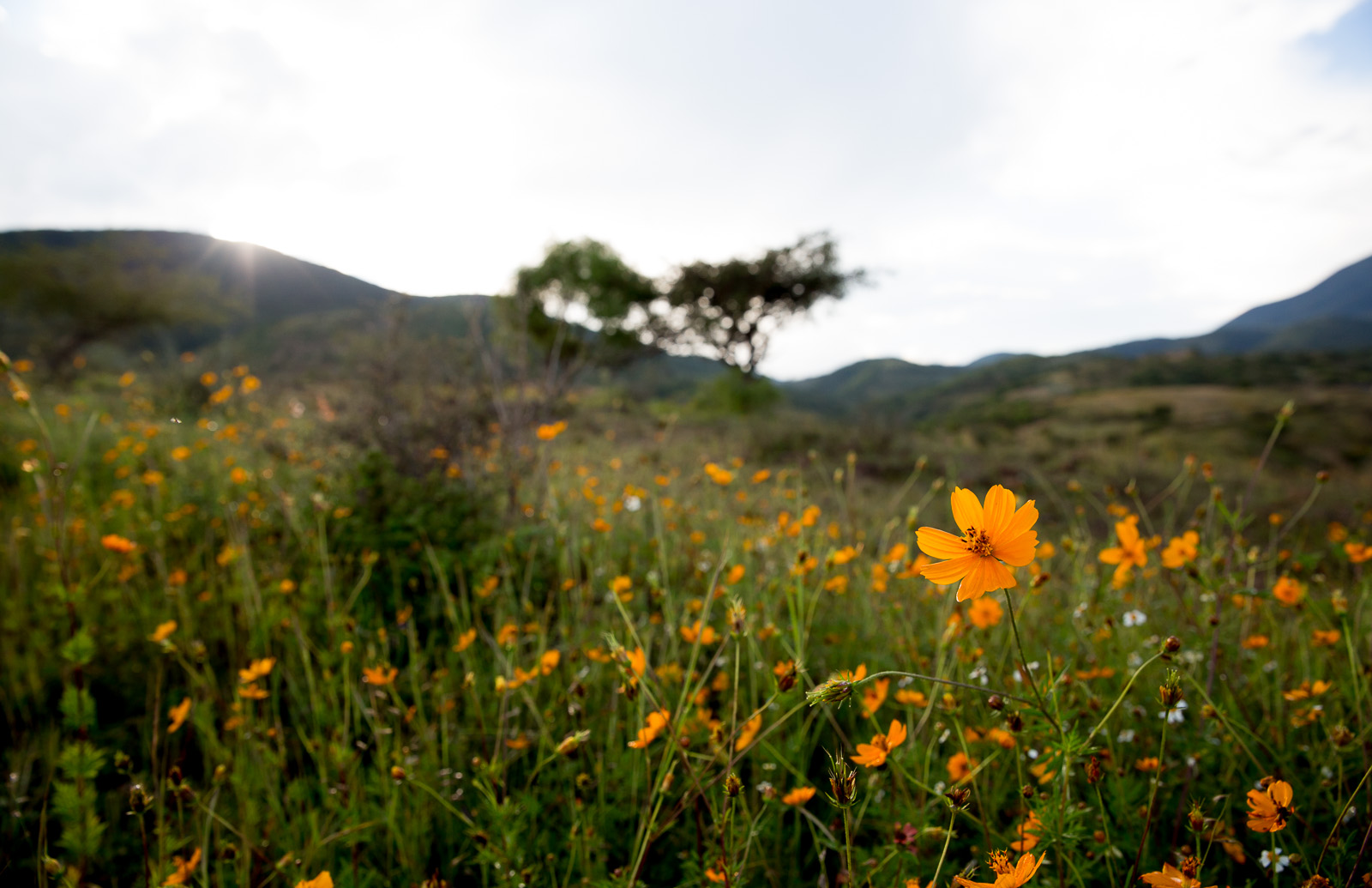 Wildflowers, San Baltazar, Mexico