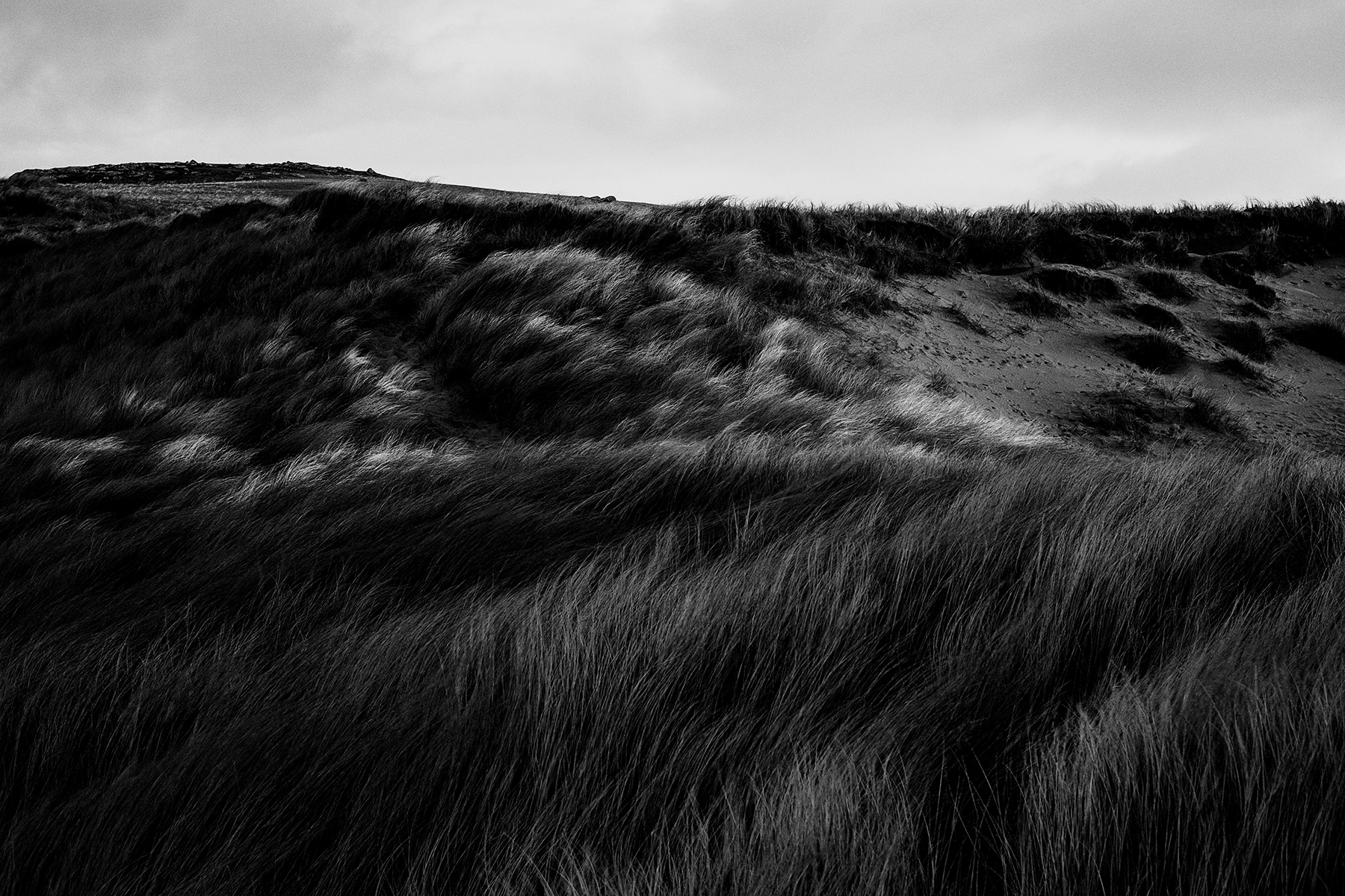 Windy_Grass.jpg