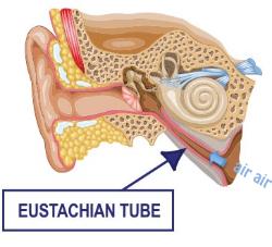 Diagram of the Eustachian tube