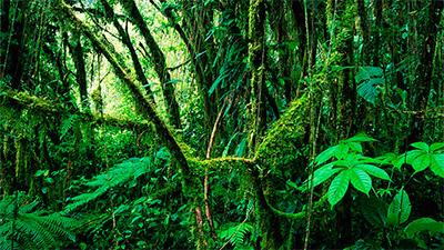 rain forest costa rica
