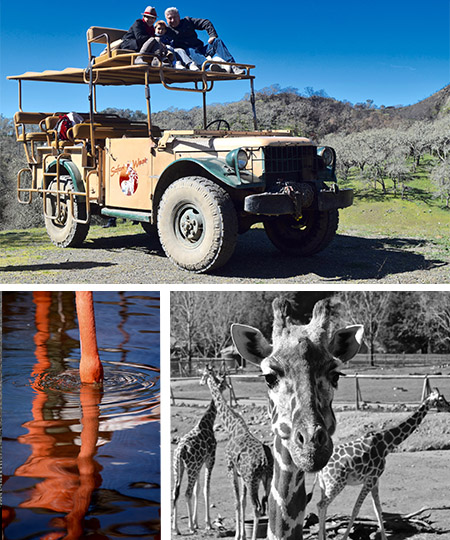 go on a safari in sonoma county - great group event