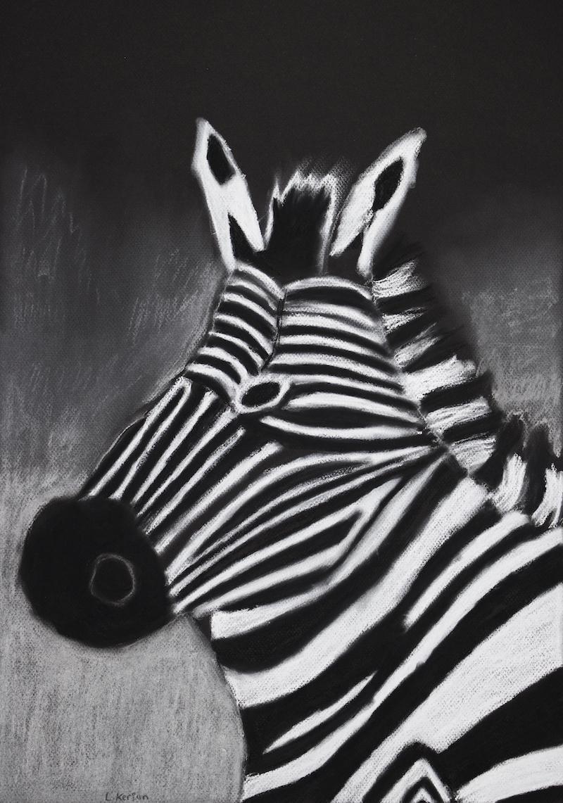 Zebra, 2017, pastel on paper, 40.6x50cm