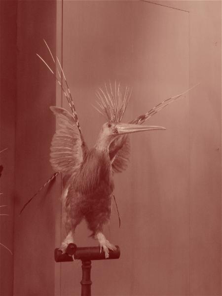 Oiseau chimère.