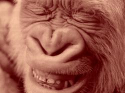 Sourire gorille