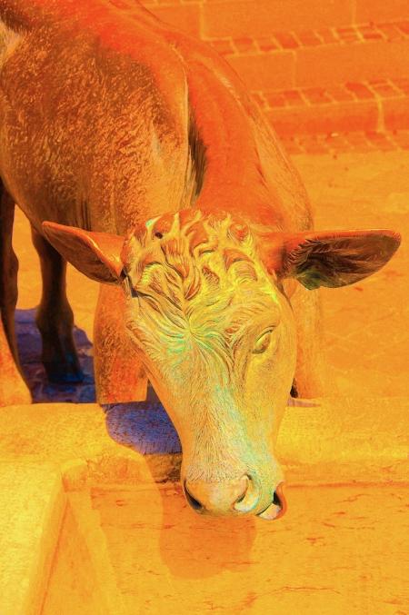 Il nous reste : admirer le veau d'or. Dans l'imagerie populaire, ce jeune animal est plutôt mal considéré. (ex cette nouvelle voiture est un vrai veau)
