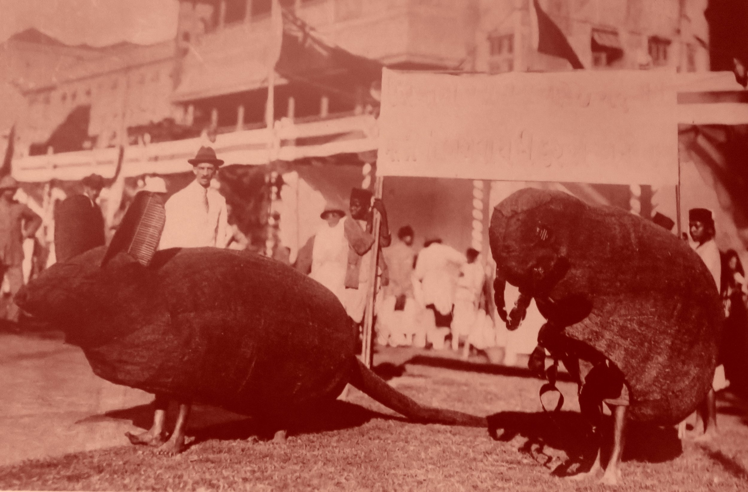En Inde, vaste épidémie dans les années 1920 : environ 12 millions de morts, et toute une pédagogie organisée pour montrer le rôle des rats et des puces.