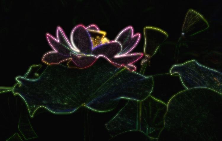 La fleur couleur odeur