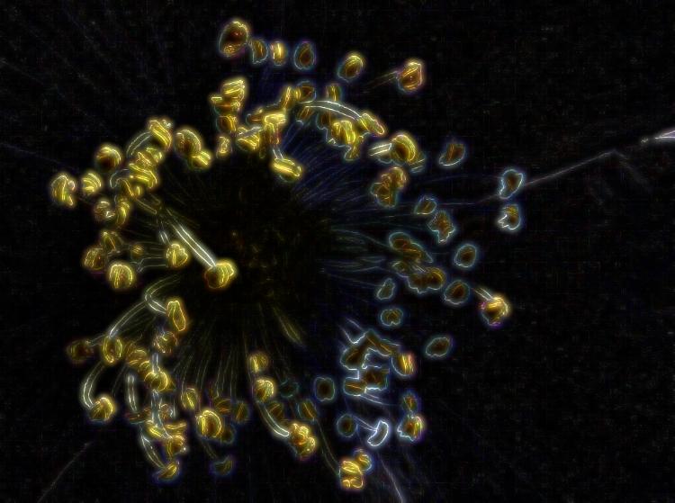 Danse des étamines, danse mâle, danse des pollens