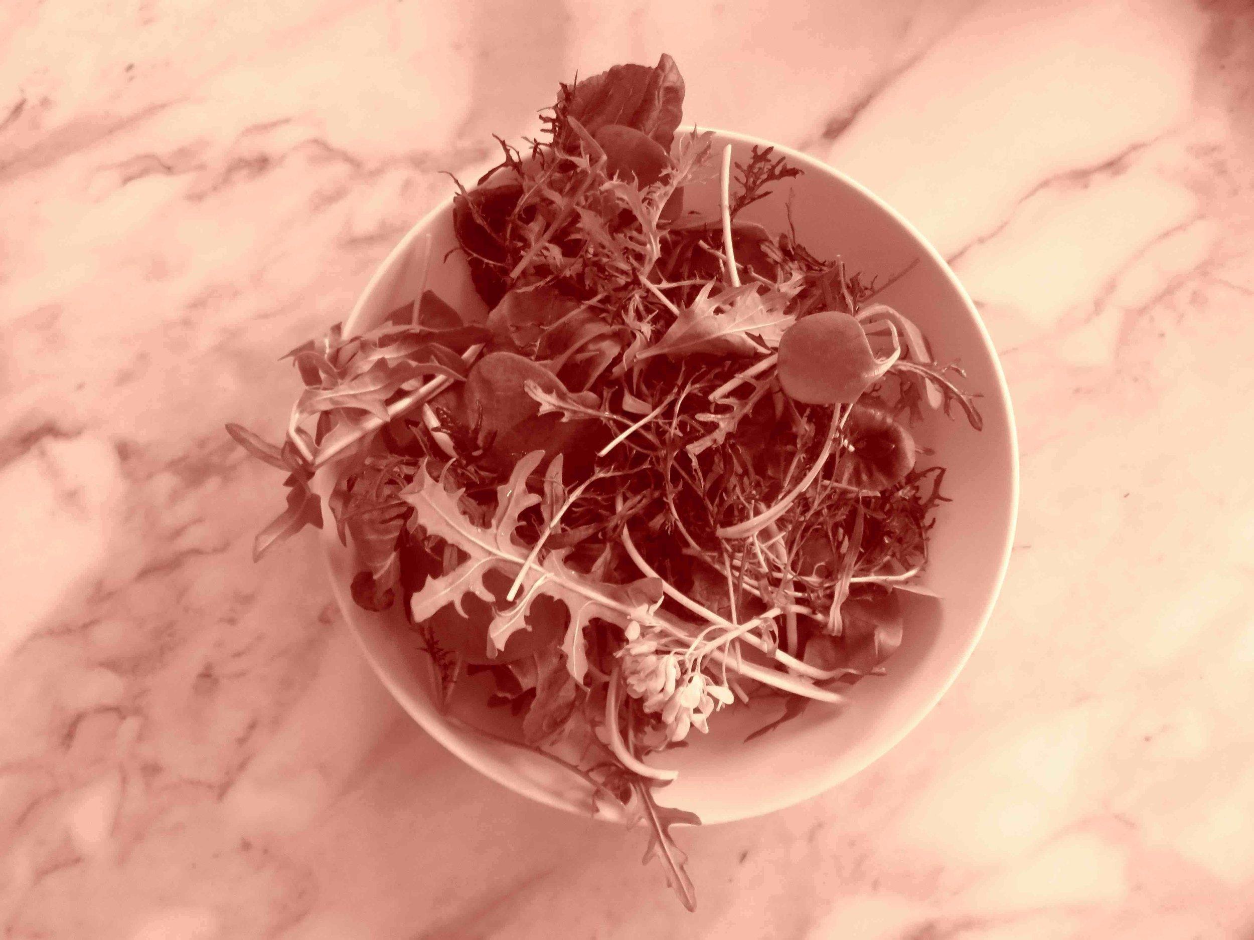 Mesclun de salade en mars, un régal. (serre froide)