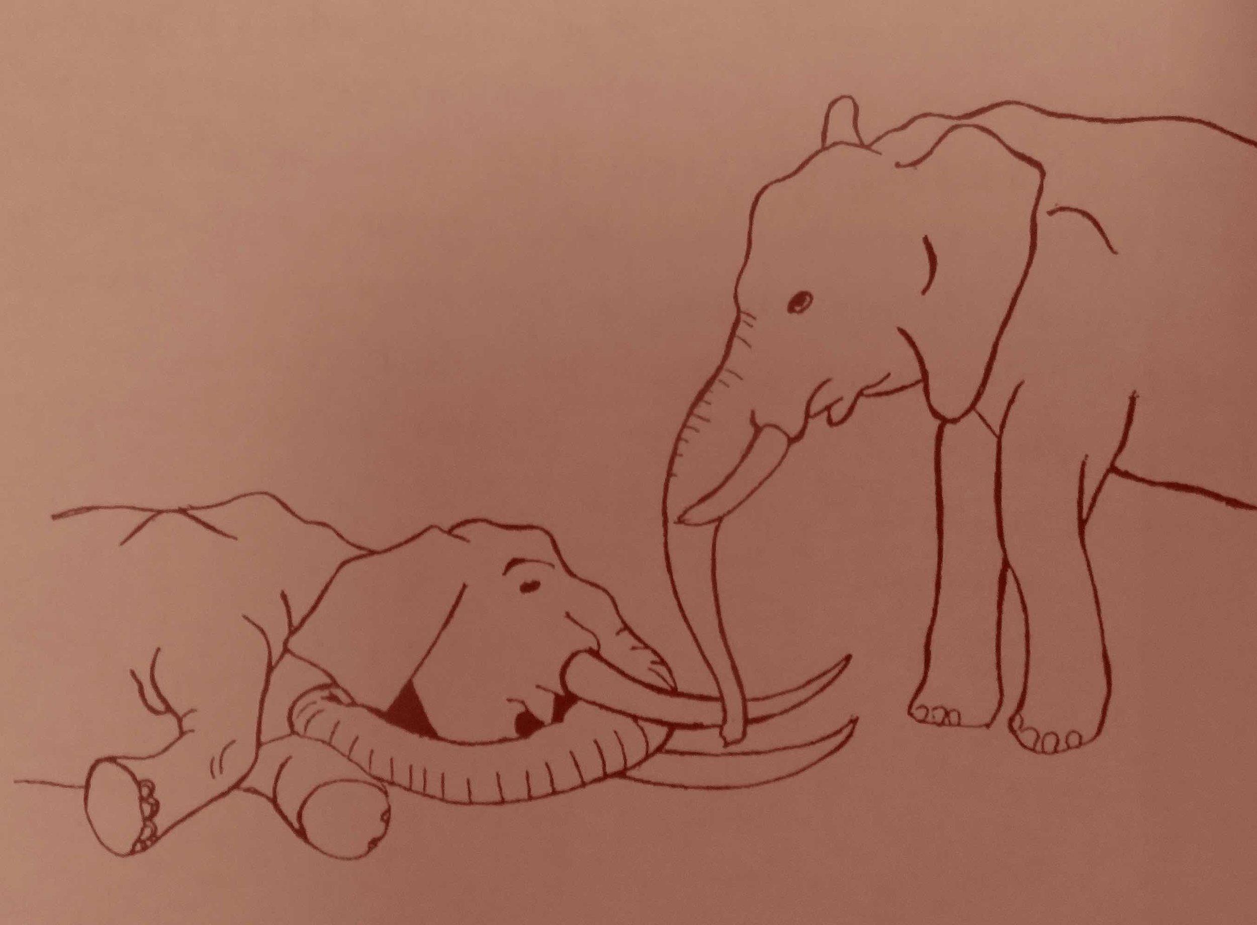 Cet éléphant trompipule la dépouille