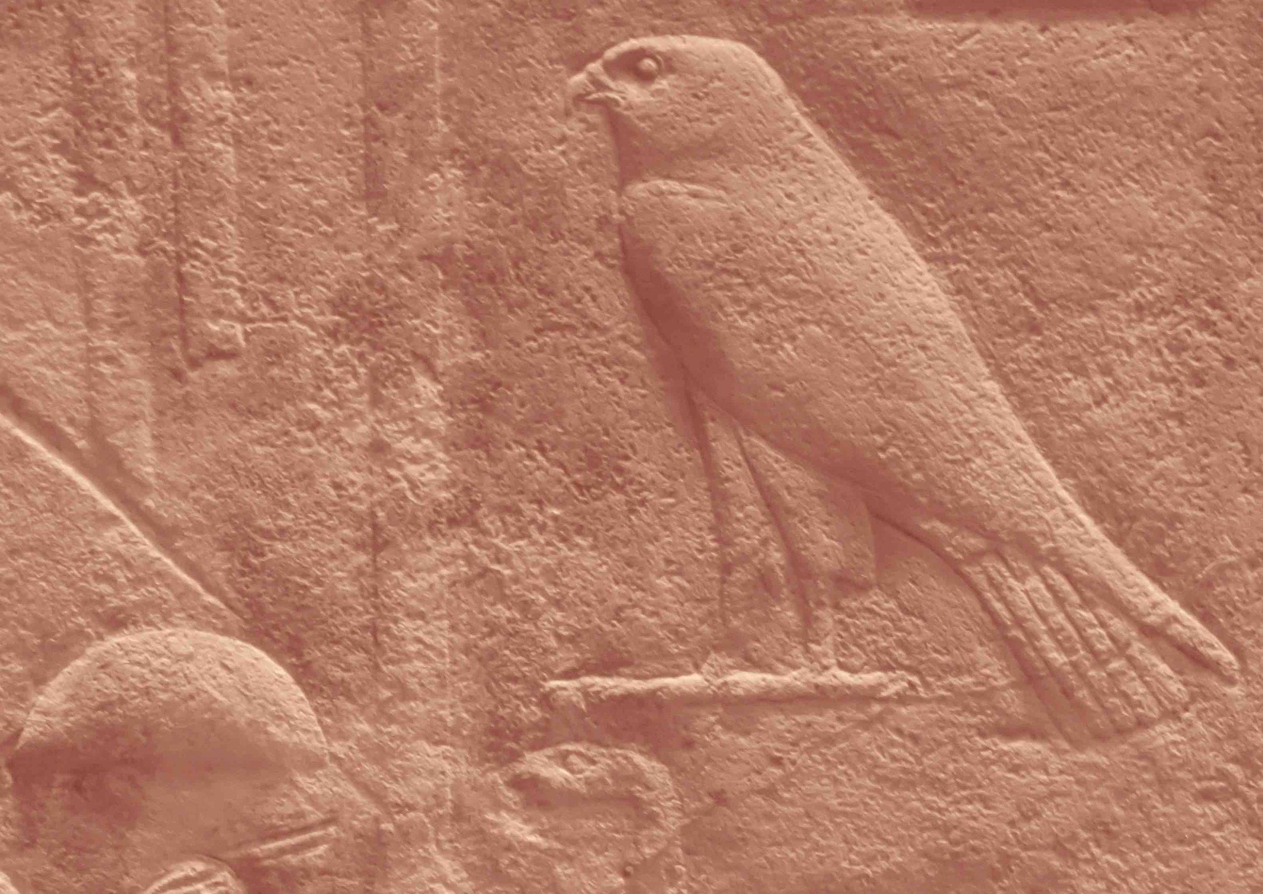 Un faucon, Horus, déifié pour son regard perçant.