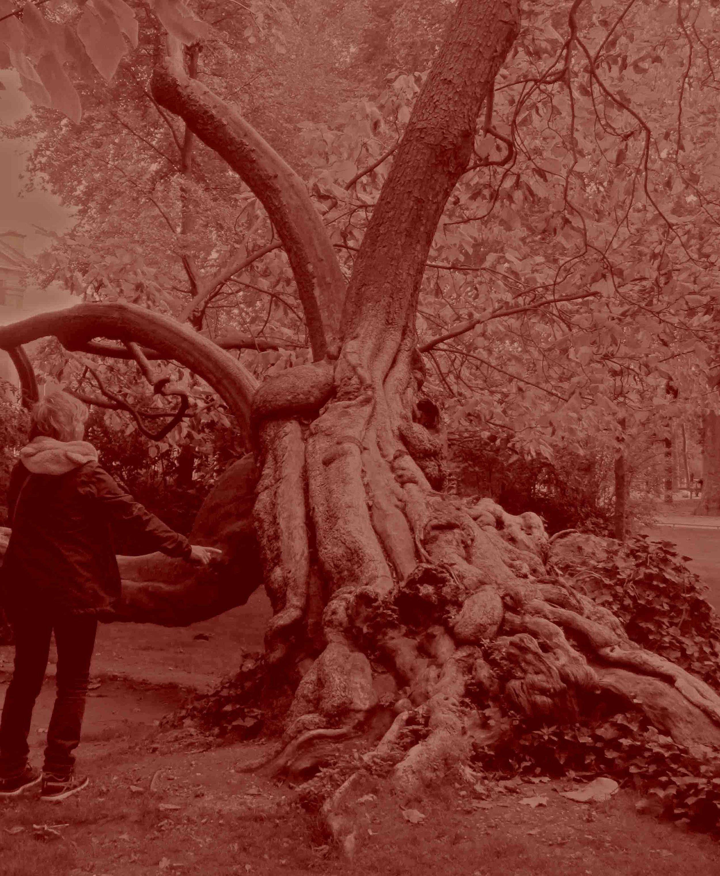 Douleur d'arbre