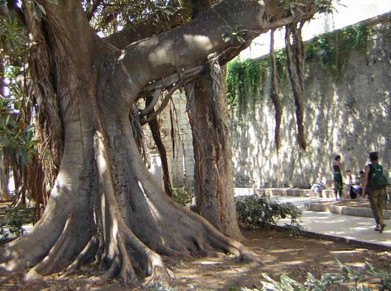 Les arbres et le phytoplancton sont les principaux amateurs de CO2