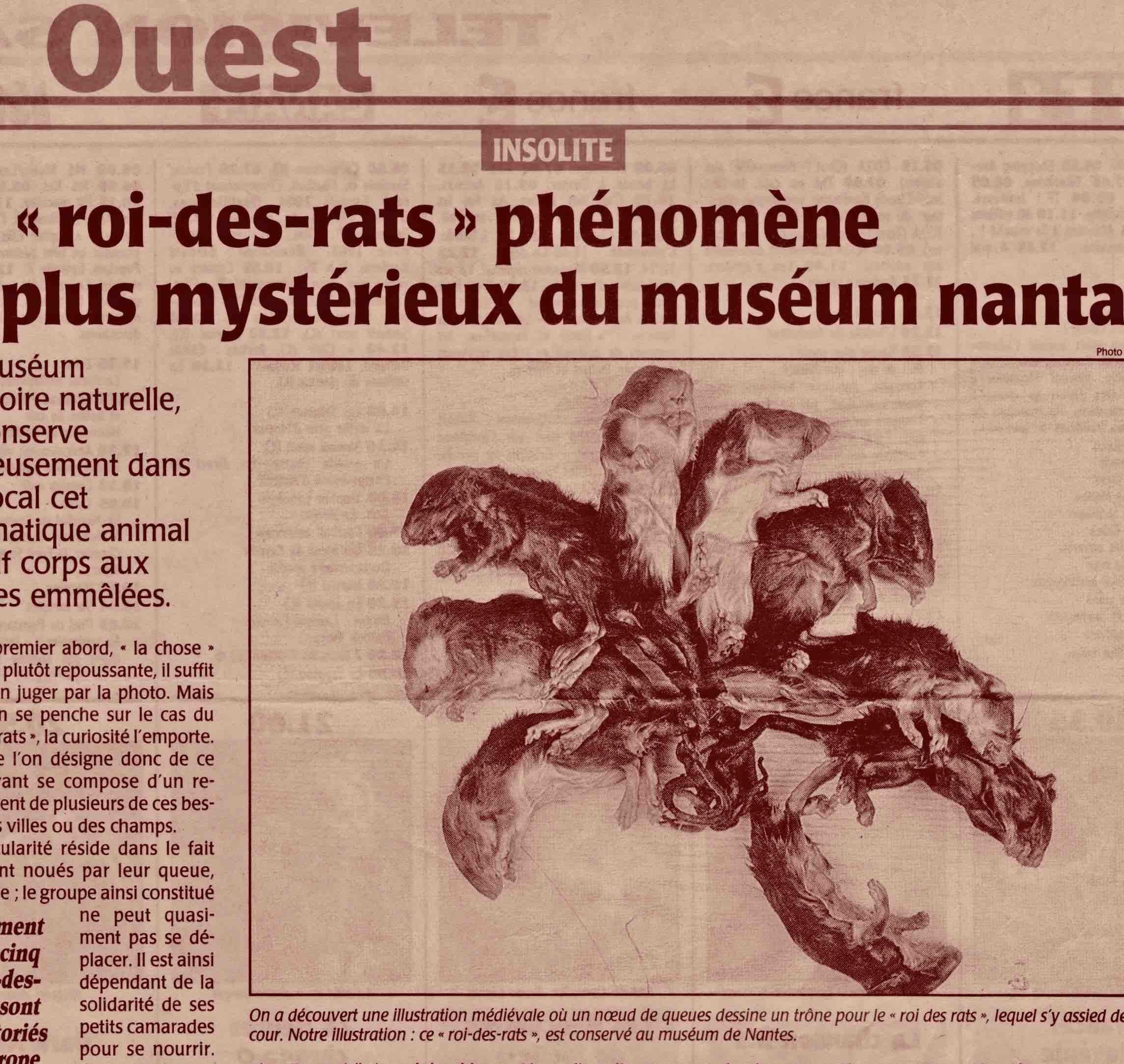 Roi des rats 2003.jpg Guy Grandjean