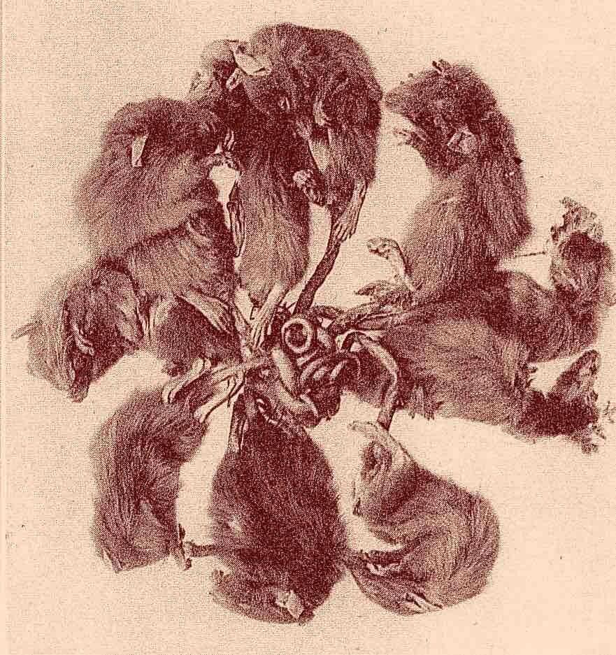 Roi des rats001.jpg Guy  Grandjean