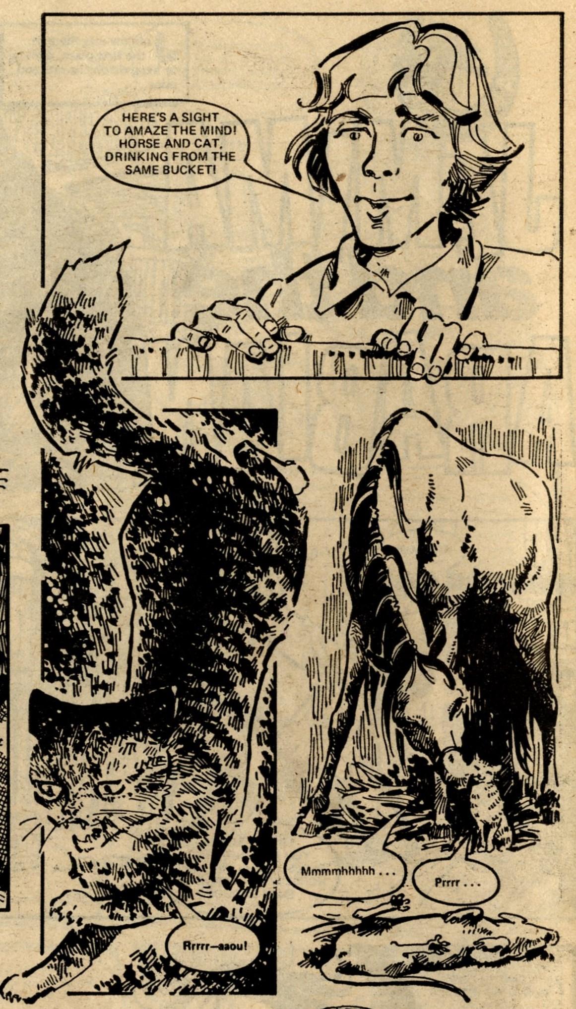 A Pony Tale: Jemima and the Arabian: Veronica Weir (artist)