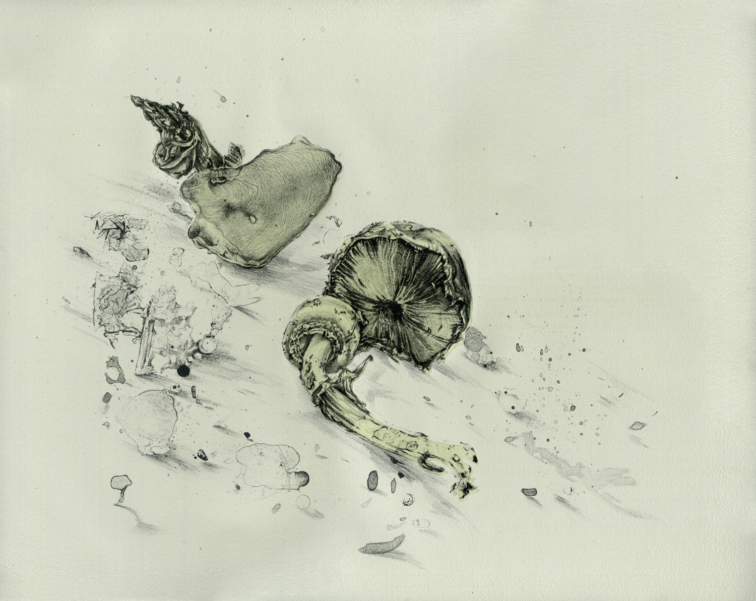 Annika Romeyn, Mushrooms, lithograph with chin colle, 34.5cm x 43cm, unique state, 2014