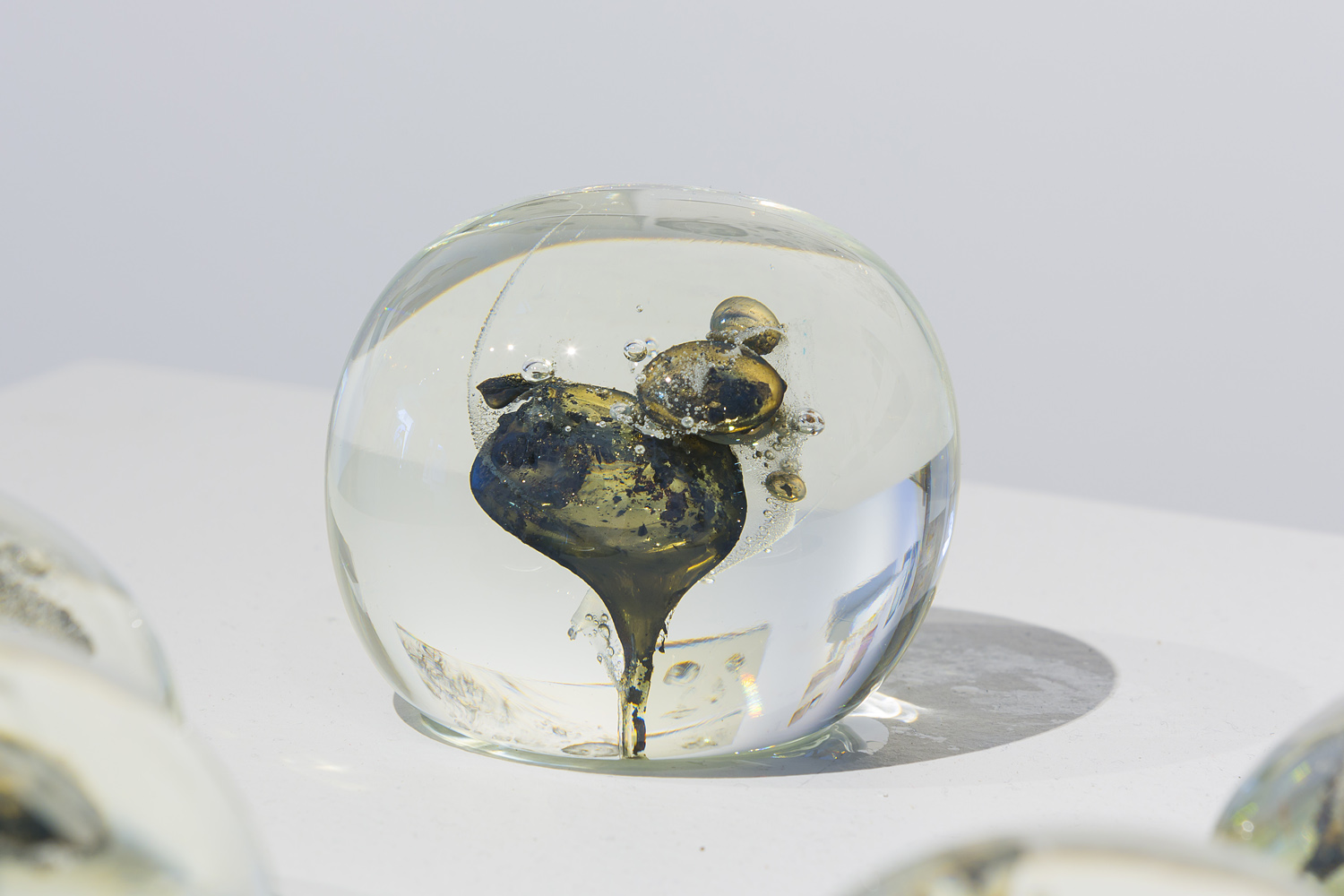 Collaboration with Emilie Patteson, Contained Incineration, hot-sculpted glass with mushroom inclusions, 2014, (photo by Adam McGrath), Canberra Glassworks GLINT exhibition install