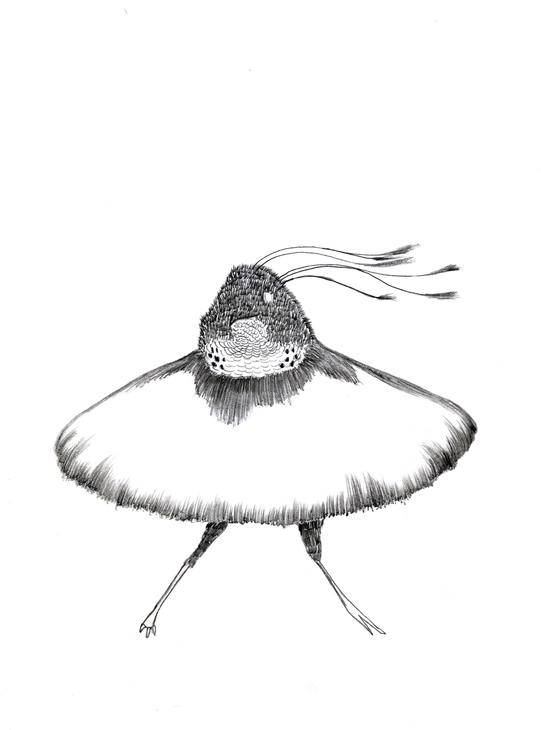 Fancy Bird, drawing