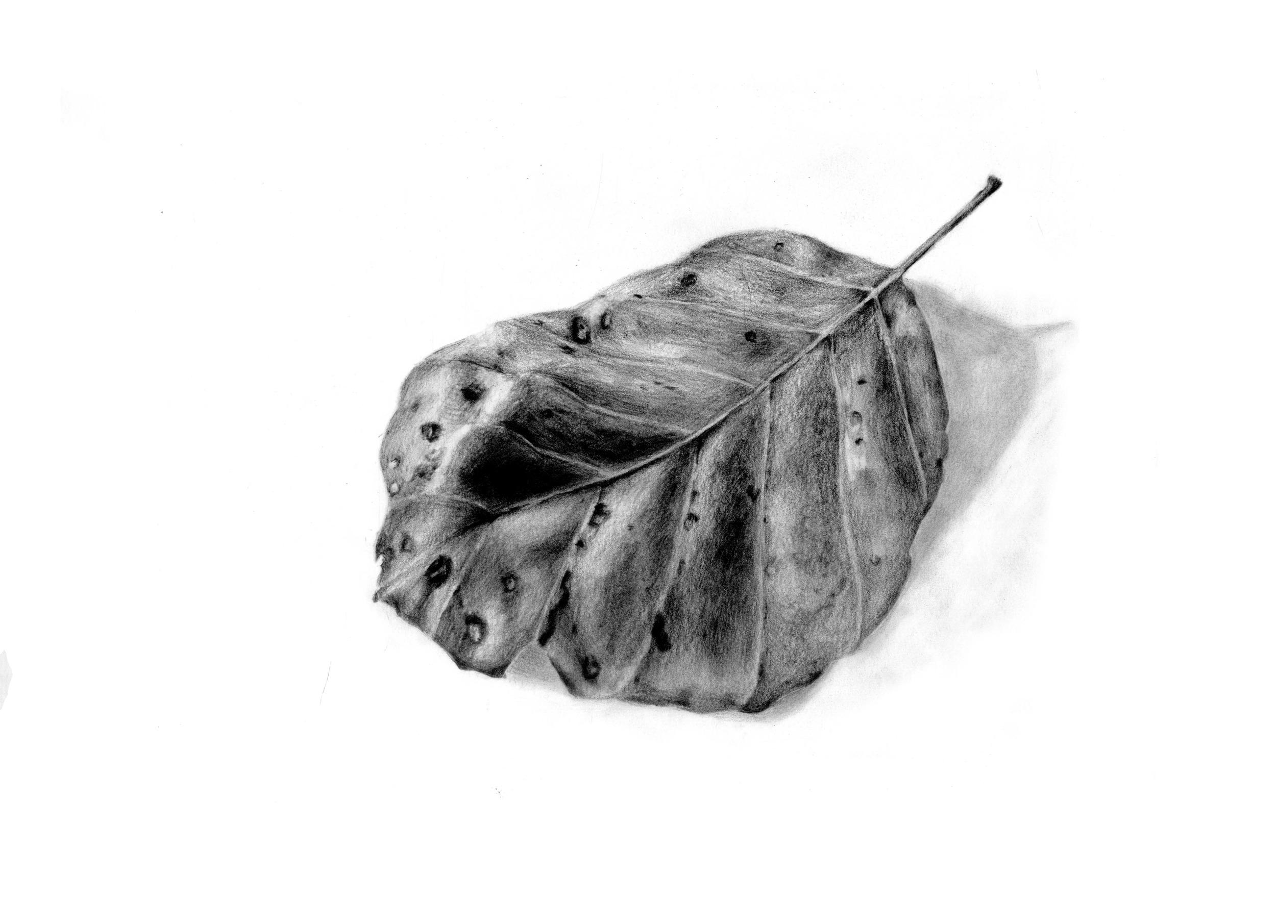 leafscan1.jpg