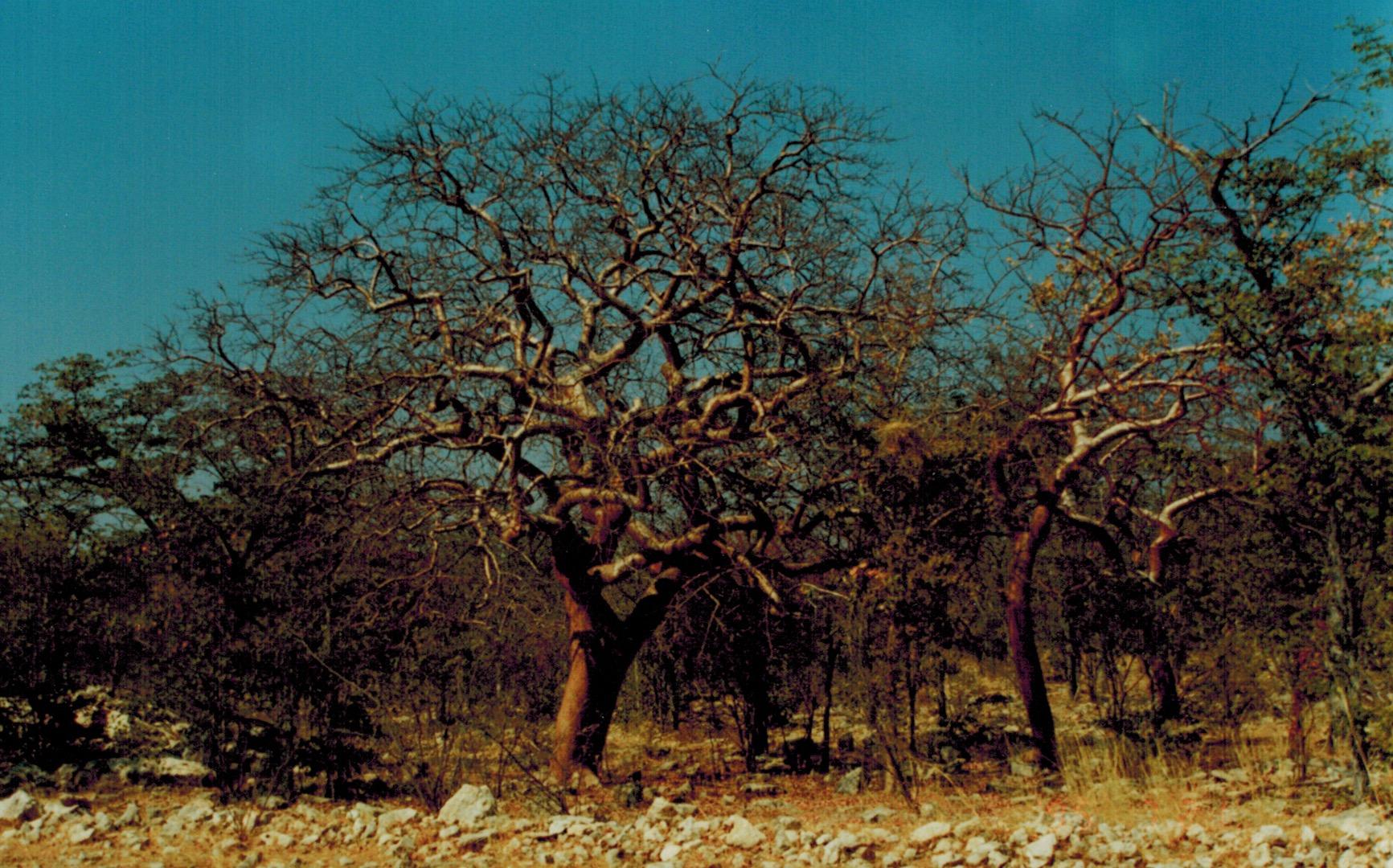 Namibia_w_puita.jpeg