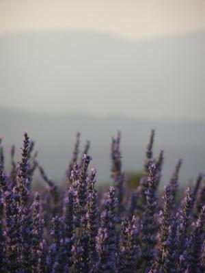 Image via FreeImages.com